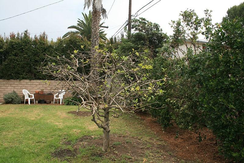 30. Backyard