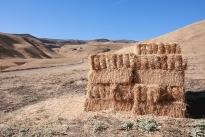 8. Ranch