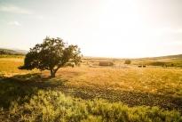 59. Ranch