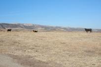 65. Ranch