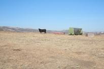 66. Ranch