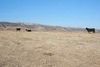 67. Ranch