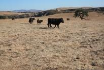 72. Ranch
