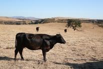 73. Ranch