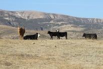 77. Ranch