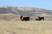 78. Ranch