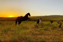 83. Ranch