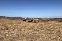 88. Ranch