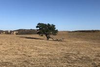 89. Ranch