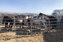 96. Ranch