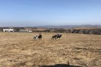 97. Ranch