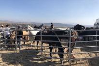 101. Ranch