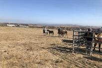 105. Ranch