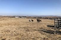 106. Ranch